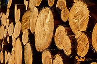 GERMANY, Teterow, forest / Wald, Forstwirtschaft, gefällte Nadelbäume, Kiefer
