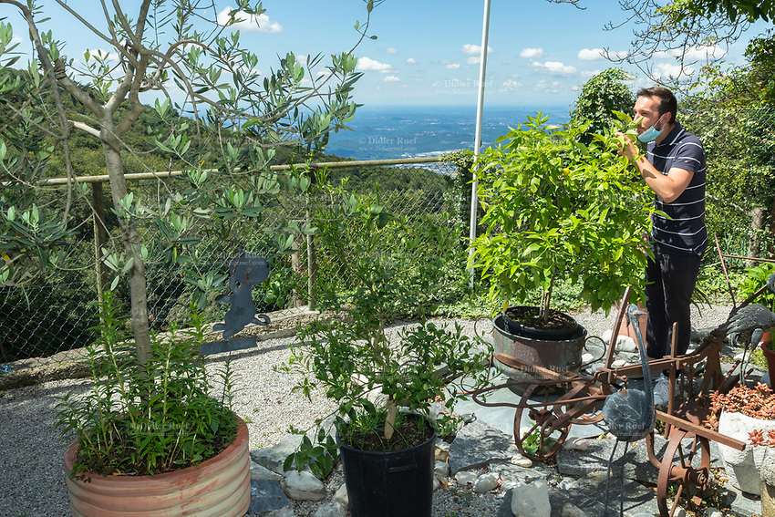 Switzerland. Canton Ticino. The family Cereghetti runs the Agriturismo Dosso dell'Ora on Monte Generoso. Luca Cereghetti smells mandarins growing on a small potted tree on the terrace. Luca is wearing a mask as prevention measure against Coronavirus (also called Covid-19). Down the mountains, a view on Italy and the Lombardy region. 4.07.2020 © 2020 Didier Ruef