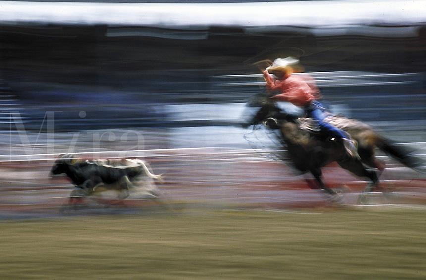 Man calf roping at rodeo, blurred motion shot. Calgary, Alberta, Canada.