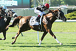 """May 11, 2014: Imagining with Joel Rosario wins the Grade I Man O' War Stakes, 4-year olds & up, going 1 3/8 mile, o the inner turf, at Belmont Park. Trainer: Claude """"Shug"""" McGaughey . Owner:Phipps Stabke . Sue Kawczynski/ESW/CSM"""