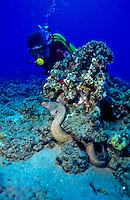 A scuba diver comes across a Whitemouth Moray Eel on Hawaii's coral reef.