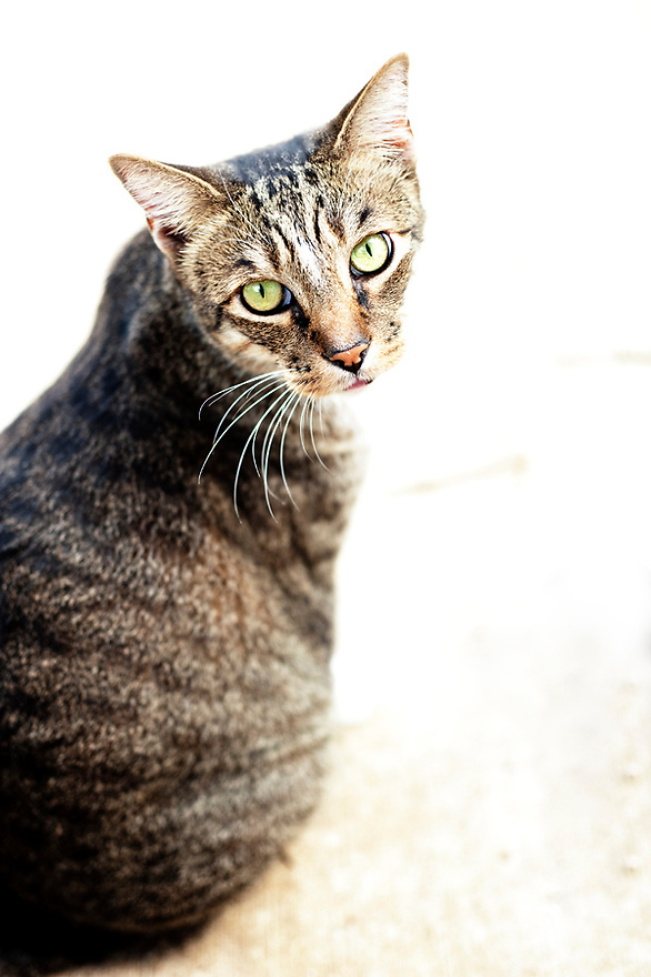 Big Daddy Cat posing.