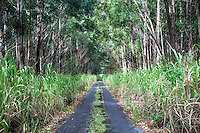 Neglected road leading through the forest, Hamakua, Big Island.