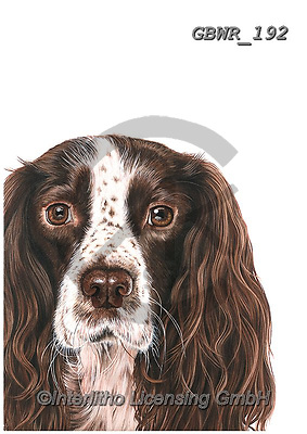 Simon, REALISTIC ANIMALS, REALISTISCHE TIERE, ANIMALES REALISTICOS, innovative, paintings+++++OliviaDeRivaz_SpringerSpaniel,GBWR192,#a#, EVERYDAY