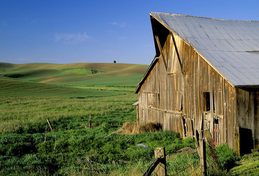 Barn and rolling wheat fields below blue sky, Palouse area, Washington.