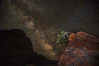 "The Milky Way appears behind the ""Bonsai Tree"" at Zion National Park, Utah"