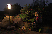 Europäischer Igel im Garten im Schein einer Taschenlampe, nachts, nachtaktiv, Mädchen, Kind entdeckt Tiere der Nacht, Westigel, Braunbrustigel, Erinaceus europaeus, Western hedgehog, Hérisson d`Europe de l`Ouest
