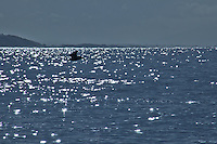 A brown pelican floats over water glittering with morning sunlight at Seacliff State Beach.