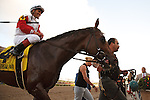 Data Link with Javier Castellano up after winning the Canadian Turf (G3T) at Gulfstream Park. Hallandale Beach Florida. 02-23-2013