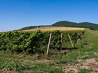 Weinberg bei Vrsac, Vojvodina Serbien, Europa<br /> vineyard, Vrsac, Vojvodina, Serbia, Europe