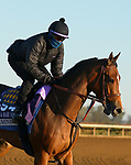 Gamine, trained by trainer Bob Baffert, exercises in preparation for the Breeders' Cup Filly & Mare Sprint at Keeneland Racetrack in Lexington, Kentucky on November 4, 2020.