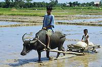 PHILIPPINES Palawan, farmer and son with water buffalo cart / Philippinen Palawan, Vater und Sohn mit einem Wasserbueffel Karren