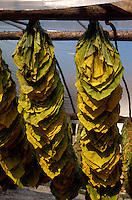 Bulgarien, Tabak trocknet  bei Vraza