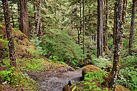 Lunch Creek hiking trail, Tongass National Forest, Ketchikan, Inside Passage AK, Alaska, USA. Largest national forest in the USA