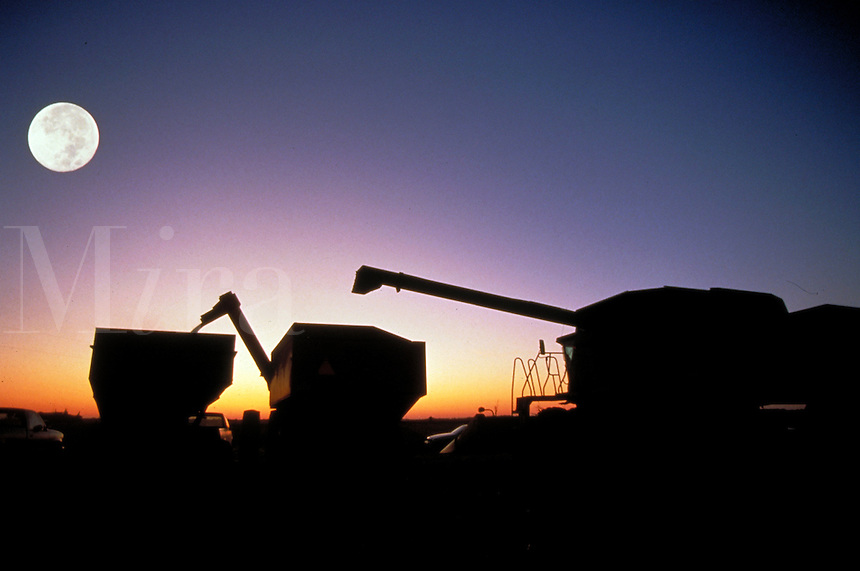 Harvest moon as grain is transferred to wagons during midwest autumn harvest.