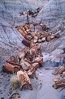 Petrified logs on Blue Mesa<br /> Petrified Forest National Park<br /> Colorado Plateau<br /> Arizona