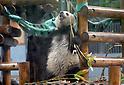 Giant Panda Cub Shan Shan Celebrates 2nd Birthday