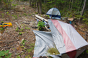 Poor leave no trace camping - Abandoned campsite off of Fire Road 511 along the Kancamagus Scenic Byway (route 112), which is one of New England's scenic byways in the White Mountains, New Hampshire.