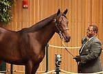 Hip #291 Dynaformer - Shades of Grace colt at the Keeneland September Yearling Sale.  September 11, 2012.