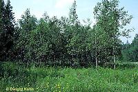 SC01-028z  Meadow - plant succession meadow - second stage 8 years later - (series - SC01-027z,028z,029z,030z)