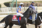 2011 03 05: Heavy favorite Calibrachoa, part of an entry, in the post parade for the Grade 3 Tom Fool Stakes, for 3-year olds & up, at 6 furlongs, on the inner dirt track, Aqueduct Racetrack, Jamaica, NY. Trainer Todd Pletcher. Owner Repole Stables
