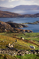 AJ0985, Europe, Republic of Ireland, Ireland, Ring of Kerry, Iveragh, Scenic view of the lush green pastures and beautiful countryside at Sheehan's Point on the Atlantic Ocean in County Kerry.