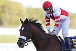 02 OCT 2010: Havre de Grace, ridden by Jeremy Rose, wins the Gr. II Cotillion Stakes at Parx Racing at Philadelphia Park, Bensalem, PA. (Joan Fairman Kanes/Eclipse Sportswire)