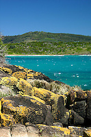 Brush Island, New South Wales South Coast and Coastal Island bird surveys