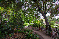 Path with bench under oak trees and camellias in woodland area of Gamble Garden, Palo Alto, California