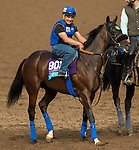 ARCADIA, CA - NOV 01: Bowies Hero, owned by Agave Racing Stable & Herbert Bloodstock and trained by Philip D'Amato, exercises in preparation for the Breeders' Cup Juvenile Turf at Santa Anita Park on November 1, 2016 in Arcadia, California. (Photo by Casey Phillips/Eclipse Sportswire/Breeders Cup)