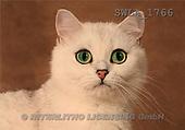 Carl, ANIMALS, photos, white cat(SWLA1766,#A#) Katzen, gatos