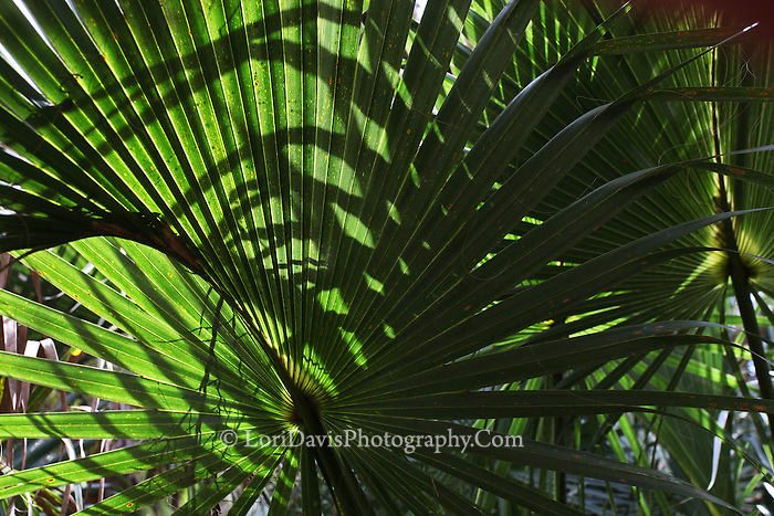 Palm Fronds 4