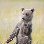 Dancing bear by Hao Jiang