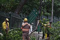 08.04.2019 - Queda de árvore na Alameda Casa Branca em SP