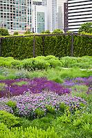 Lurie Garden reconstructed prairie meadow garden at Millenium Park, downtown Chicago; plant design by Piet Oudolf