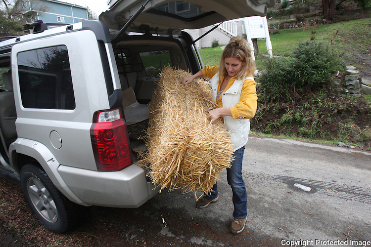 Kelly Page drops off hay and treats to dogs living in a backyard under a makeshift shack in Seattle on January 9, 2009. Kelly says Seattle animal control has been called 17 times about these particular dogs.  Kelly drives around and looks for dogs who are chained or confined.  She then talks to the owners about the hazards of confining a dog and tries to help out in any way she can.(Karen Ducey/Seattle PI)