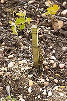 sandy gravelly soil chateau le boscq st estephe medoc bordeaux france