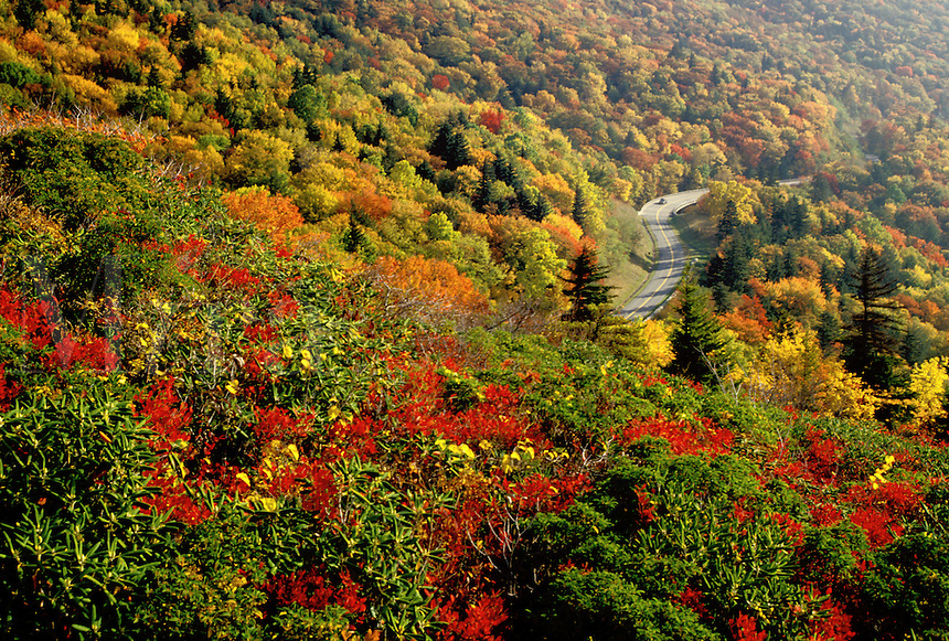 Blue Ridge Parkway, North Carolina, NC, View from Rough Ridge of the Blue Ridge Parkway in the fall.