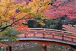 Japan, West Honshu, Kansai, Kyoto: Japanese bridge and temple garden in autumn, at Daigoji Temple | Japan, West-Honshu, Kansai, Kyoto: japanischer Garten des Daigoji Tempels in voller Herbstpracht mit japanischer Bruecke