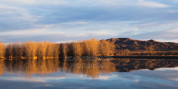Wetland, Bosque del Apache National Wildlife Refuge, Socorro, New Mexico, USA