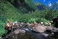 Kohala Ditch Trail workmen, on horseback, tranversing stream