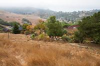 Open space grassland next to California garden; Tiburon Hillside Garden by Ring Mountain Preserve