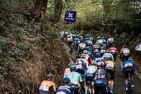 peloton up the Hagaard (Overijse)<br /> <br /> 60th De Brabantse Pijl 2020 - La Flèche Brabançonne (1.Pro)<br /> 1 day race from Leuven to Overijse (BEL/197km)<br /> <br /> ©kramon