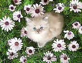 Xavier, ANIMALS, REALISTISCHE TIERE, ANIMALES REALISTICOS, cats, photos+++++,SPCHCATS829,#A#