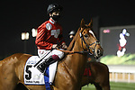March 27, 2021: FELIX (GB), #5 in the post parade for the Dubai Turf on Dubai World Cup Day, Meydan Racecourse, Dubai, UAE. Shamela Hanley/Eclipse Sportswire/CSM