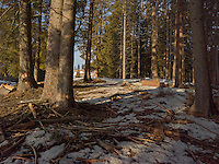 FOREST_LOCATION_90047