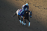 November 3, 2020: Rombauer, trained by trainer Michael W. McCarthy, exercises in preparation for the Breeders' Cup Juvenile at Keeneland Racetrack in Lexington, Kentucky on November 3, 2020. John Voorhees/Eclipse Sportswire/Breeders Cup/CSM