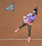 A Parisian pigeon causes a let as Serena Williams (USA) defeats Andrea Hlavackova (CZE) 6-3, 6-3 at  Roland Garros being played at Stade Roland Garros in Paris, France on May 26, 2015