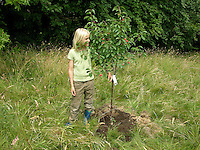 Kind, Junge pflanzt einen Obstbaum, Kirschbaum auf einer Wiese, Streuobstwiese, im Größenvergleich zu seinem neu gepflanzten Baum