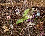 December 22, 2016. North Charleston, South Carolina.<br /> <br /> The remnants of a memorial for Walter Scott at the site of his shooting. <br /> <br /> Walter Scott was shot on April 4, 2015, in North Charleston, South Carolina after a routine traffic stop by police officer Michael Slager. Fearing an outstanding warrant, Scott fled the scene and was briefly chased and caught  by Slager. After a scuffle, Scott ran again and was shot in the back by Officer Slager. A video taken by eyewitness Feidin Santana captured much of the incident, but some facts between the video and the officer's account were disputed.<br /> <br /> Officer Slager's first trial for murder ended on December 5, 2016 in mistrial after the jury couldn't reach a unanimous decision. The lead prosecutor in the case immediately announced her intent to retry Slager, who has also been indicted by federal prosecutors.